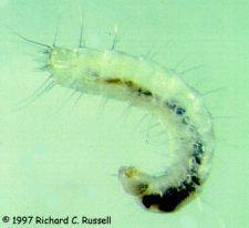 Pest Control Brisbane Fleas - Best 1 Cleaning