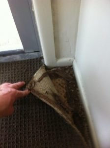 Damage Carpet & Underlay