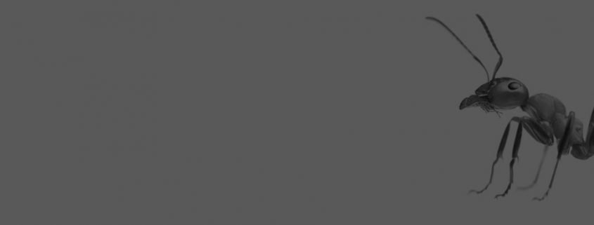 Pest Control Sunshine Coast - Ants